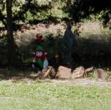 GnomeSpottingjpg_10